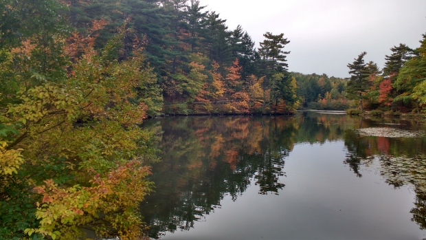 Marsha Jeffers shared this lovely photo of a pond in Bridgewater, N.S, where leaves are turning. (Marsha Jeffers / MyNews)