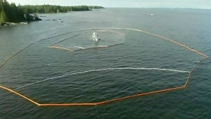 First Nations call Bella Bella spill a disaster