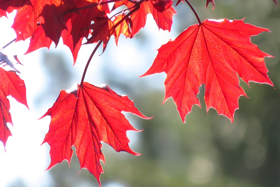 Here's an up-close look at fall colours thanks to Nancy Reitz in Waterloo.