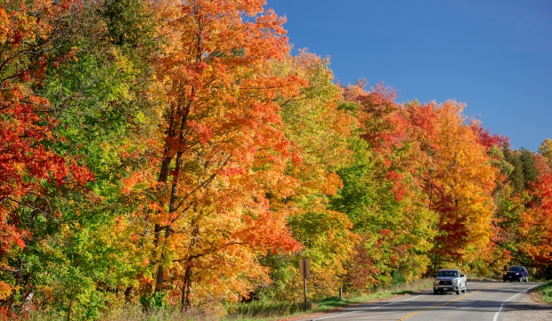 Peter Burian took this photo of fall colours in bloom in Guelph.