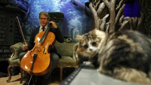 "David Teie, a U.S. composer and cellist, prepares to play his cello during a interview to promote his new album ""Music for Cats"". (AFP PHOTO/ADRIAN DENNIS)"