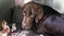 Saskatchewan dog Bruno survives month in well