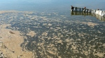 Oily water floats through James Smith Cree Nation lands on Friday, August 25, 2016, in this handout photo. (Bryan Eneas/THE CANADIAN PRESS/HO- paNow.com)