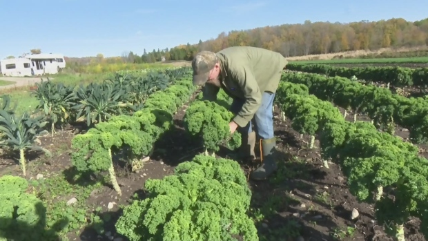 Fresh Food Ideas: From cows to organics