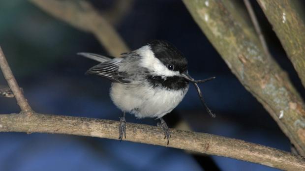Bird with beak deformity in Alaska