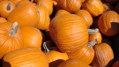A pile of pumpkins is seen in this file image. (VasenkaPhotography / Flickr)