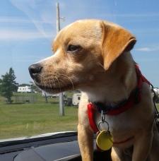 Bruno rescue dog