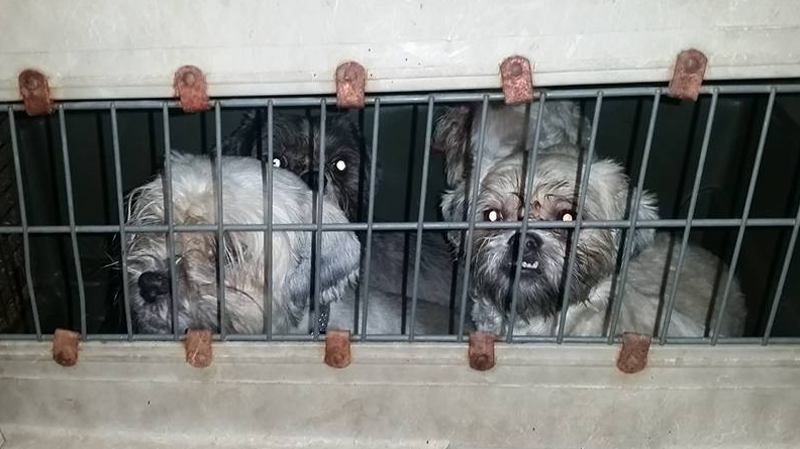 Eight dogs were found crammed into a filthy crate in Richmond, B.C. (Facebook)