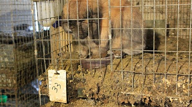 Erin Woods, animal abuse, animal neglect, animal s