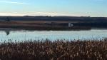 A stolen semi-truck submerged in a slough near Luseland, Sask. (ANGELINA IRINICI/CTV SASKATOON)