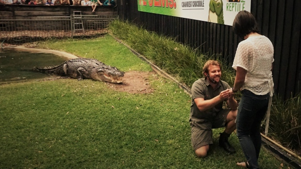 Aussie Reptile Handler Baits Hungry Crocodile Before Proposing To