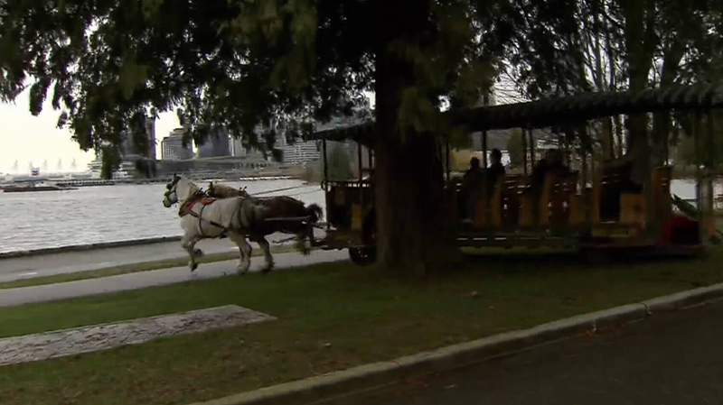 Tourists in Stanley Park were taken on a wild ride after horses carrying a carriage became spooked by a protest and bolted onto the Stanley Park seawall on Nov. 7, 2016. (CTV)