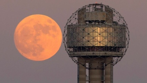 The moon rises behind Reunion Tower in downtown Dallas, Sunday evening, Nov. 13, 2016. On Monday the supermoon will be the closest full moon to earth since 1948, and it won't be as close again until 2034. (Tom Fox/The Dallas Morning News/AP)