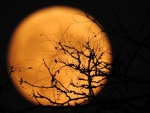 Supermoon on November 13, 2016. (Shannon Froude/CTV Viewer)