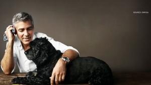 George Clooney dog