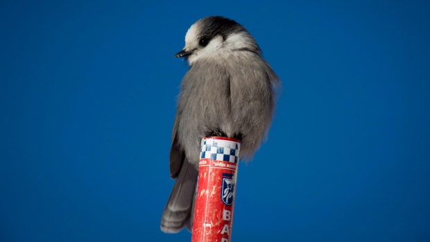 Avibase  Bird Checklists of the World