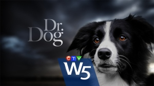 From Europe to Canada, man's best friend is fast becoming man's best fighter in the battle against potentially deadly illnesses.