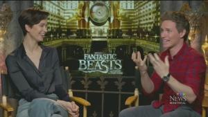 Mose at the Movies: Fantastic Beasts