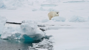 In this Friday June 13, 2008 file photo, a polar bear stands on an ice floe near the Arctic archipelago of Svalbard, Norway. (AP Photo/Romas Dabrukas, File)