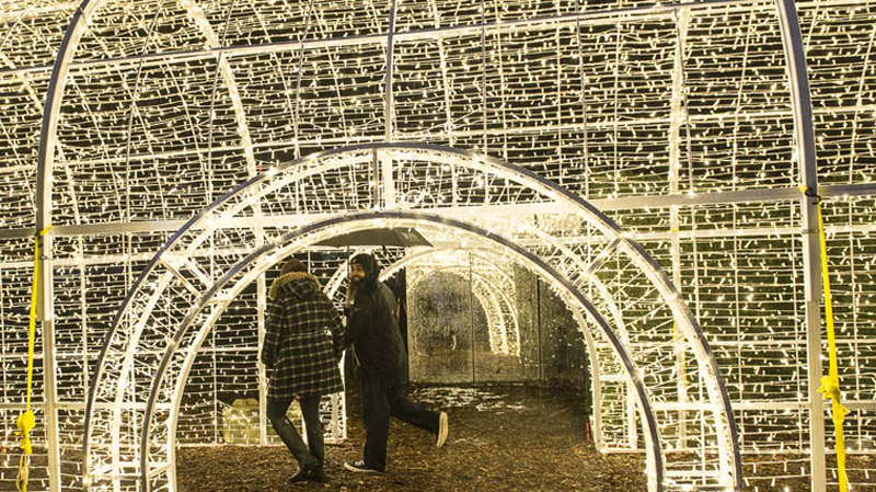 Merry and bright: Inside the world's largest Christmas light maze ...
