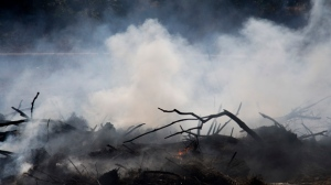 A fire still smolders after a forest fire near Hadera, Israel, Sunday, Nov. 27, 2016. After several days of extended fires that caused major damage in northern Israel and in the Jerusalem area, firefighters have managed to quickly gain control of most of the blazes that have erupted since. (AP Photo/Ariel Schalit)