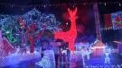 Extended: Stanley Park's winter wonderland