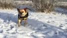A dog at an off-leash park. (KARYN MULCAHY/CTV REGINA)
