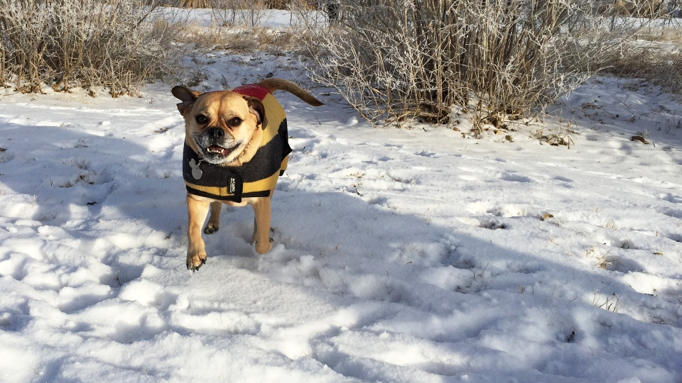 A dog at an off-leash park. (KARYN MULCAHY/CTV REGINA)