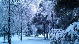 A perfect Winter Wonderland view. Photo by Gwen Deresh.