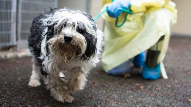 Dog seized from Squamish