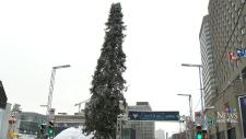 Montreal's ugly Christmas tree