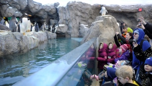 Adults and children check out penguins during opening day for the Penguin Plunge exhibit at the Calgary Zoo in Calgary, Alberta on Friday, Feb. 17, 2012. (THE CANADIAN PRESS / Larry MacDougal)