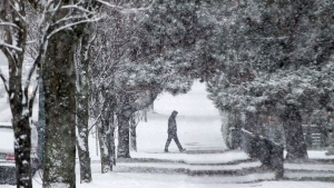 A man is framed by a canopy of trees as snow falls in Vancouver, B.C., on Friday December 9, 2016. A snowfall warning is in effect for parts of the south coast and the Fraser Valley. THE CANADIAN PRESS/Darryl Dyck
