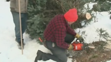 CTV Atlantic: Scientist working to maintain trees