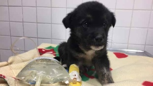 """I've never seen a puppy recover after being that cold,"" says Manitoba Underdogs Rescue executive director Jessica Hansen. (Source: Manitoba Underdogs Rescue)"