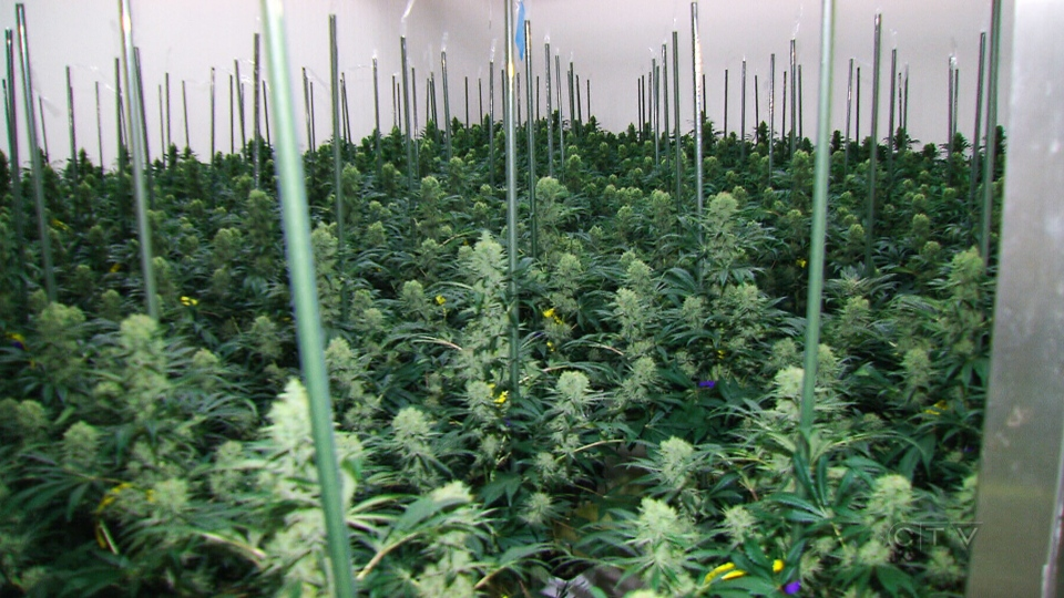 should marijuana be legal in canada The rapid and significant changes to the legal status of marijuana raise new  questions and challenges for canadian employers here, we provide a general.