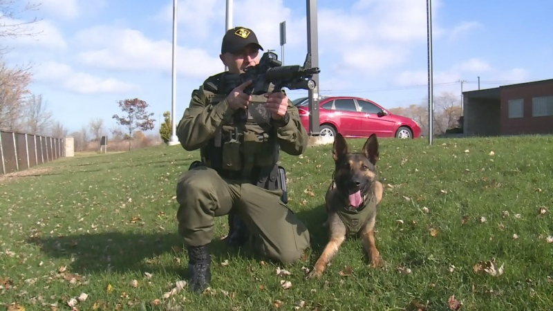 Maximus and his handler Constable Milan Matovski have had several successfully tracks since joining Essex County's K9 unit in November, 2016. (Chris Campbell / CTV Windsor)