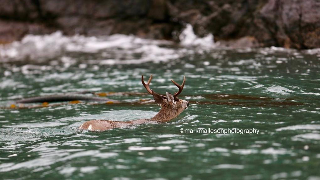 deer orca sooke