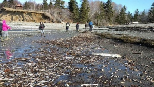 Residents of southwest Nova Scotia are perplexed and worried by the appearance of thousands of dead fish and other marine animals on the shore. (Eric Bruce Hewey / Facebook)