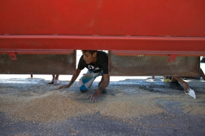 A young man collects rice that fell from a cargo truck waiting to enter the port and refill in Puerto Cabello, Venezuela, the port that handles the majority of Venezuela's food imports, on Nov. 14, 2016. (AP / Ariana Cubillos)