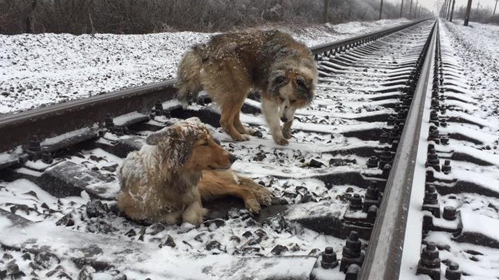A video of two dogs huddled together on a railway track in Ukraine has gone viral online since it was posted over the holidays. (Facebook: Denis Malafeev)