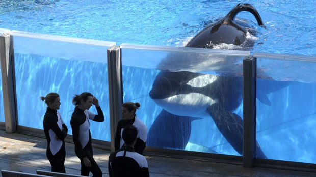 SeaWorld orca Tilikum