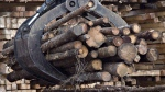 Workers pile logs at a softwood lumber sawmill in Saguenay, Que., on Nov. 14, 2008. (Jacques Boissinot/THE CANADIAN PRESS)
