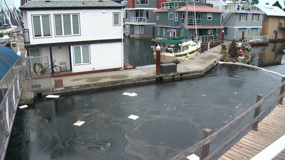 A maintenance manager at the marina reported the spill after an oily sheen showed up in the water. Jan 9, 2017 (CTV Vancouver Island)