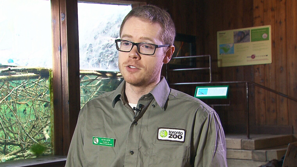 Kevin Kerr, a Toronto Zoo curator who helped arrange the study of Ward's DNA. (CTV)