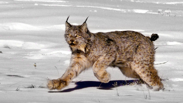 Republicans to target endangered species