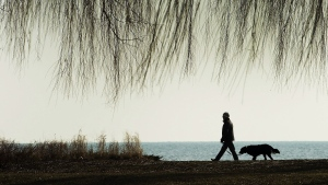 A man and his dog walk on the boardwalk along Lake Ontario in Toronto on Monday, Jan. 16, 2017. (Nathan Denette / THE CANADIAN PRESS)
