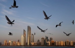 Seagulls fly over the city skyline in Abu Dhabi, United Arab Emirates, Wednesday Jan. 14, 2015. (AP Photo/Kamran Jebreili)