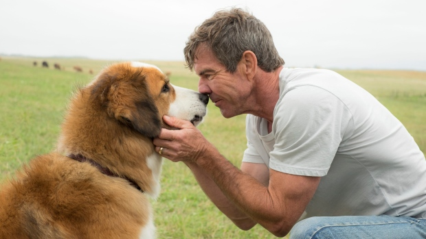 How A Dog's Purpose's Controversy Affected Its Opening At The Box Office