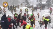 Three puppies saved from avalanche-struck hotel